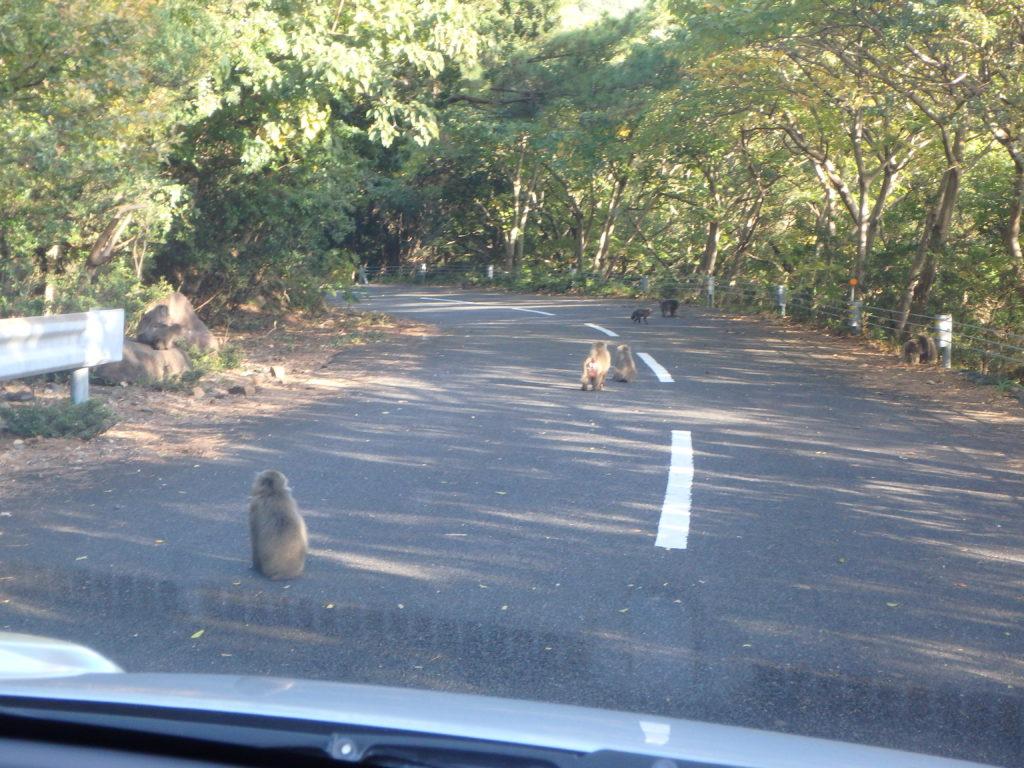 屋久島の世界自然遺産西部林道